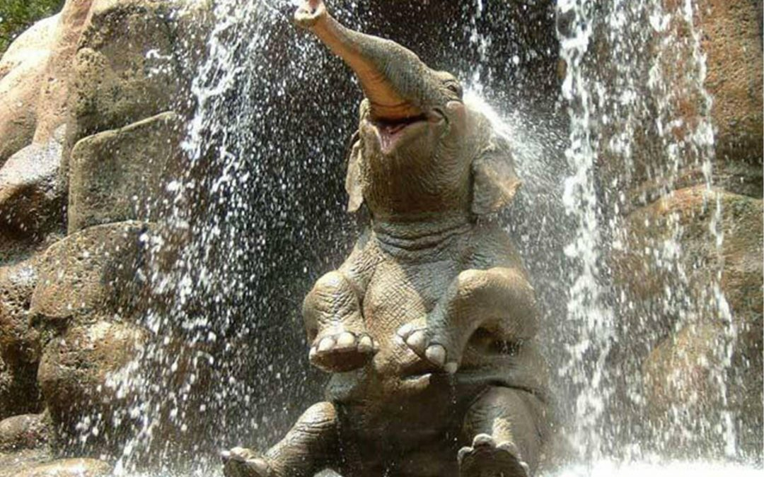Lucky: How an Elephant Helped Me Redefine the Divine